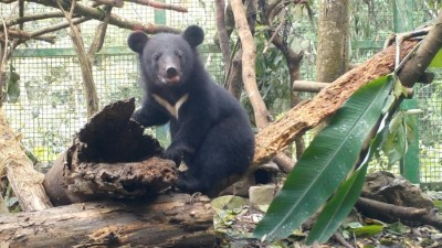 Nan'an's little bear growing up healthy